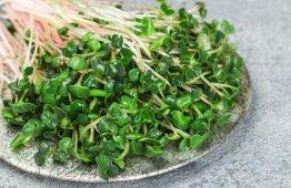 Mikro liście